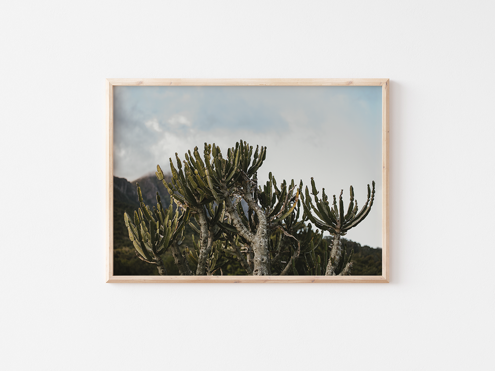 Cactus and Sky | South Africa, 2020